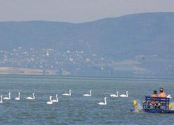 Üdülő- és horgászparadicsom Balatonfenyvesen
